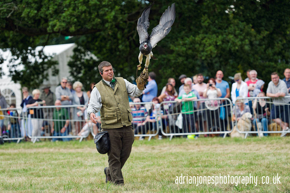 Image of Falconry Display at Whitacre and Shustoke Show