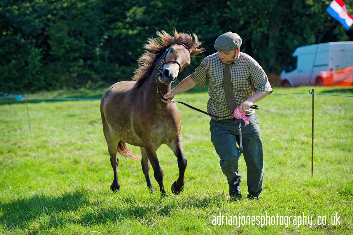 Image of Horse Display at Whitacre and Shustoke Show