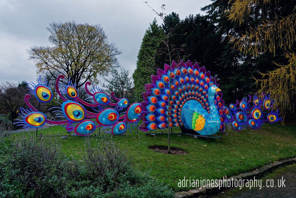 magicallanternbirmingham-21